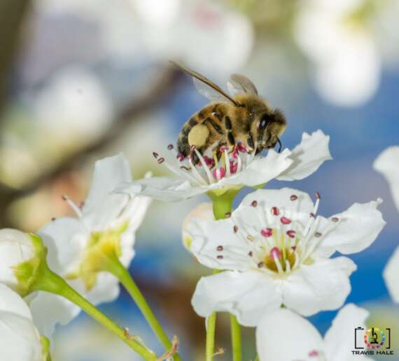 The Bee's out and about Pollinating the flowers.