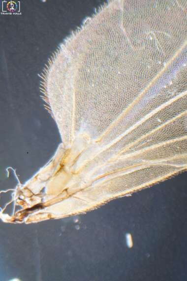A look at a section of a flies wing under the microscope. (The fly had previously died in a spider web, so was not harmed in the taking of this photo my microscopy).