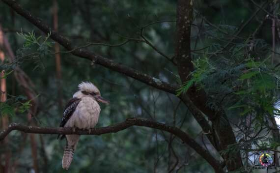 The Kookaburra, at Grants Picnic Ground in Belgrave.