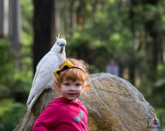 Mackenzie and a Cockatoo at Grants Picnic Ground.