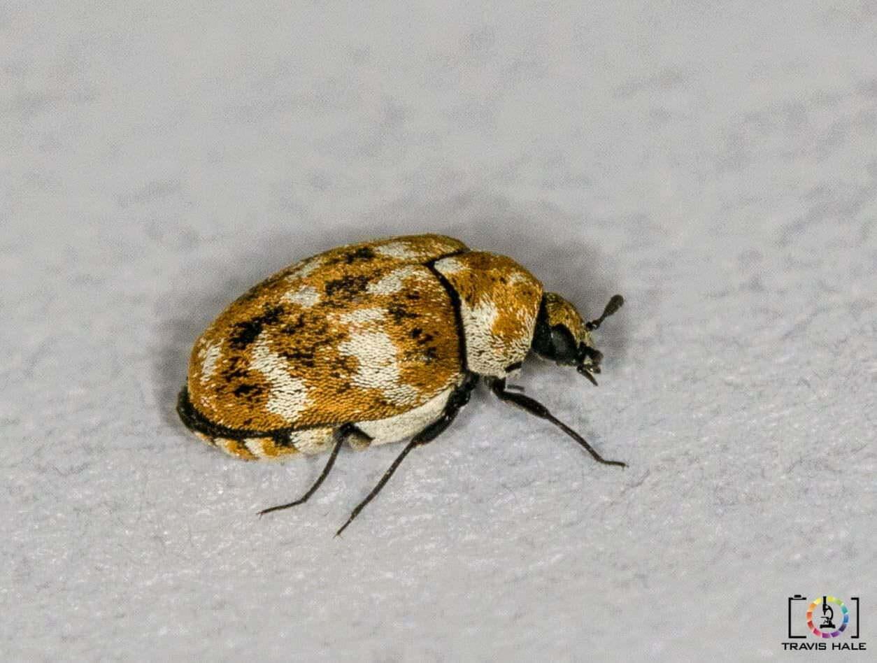 20150814-Bug-1-of-2