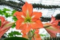 Flower Chamber