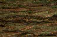 Salicylic Acid by Polarized Light Microscopy