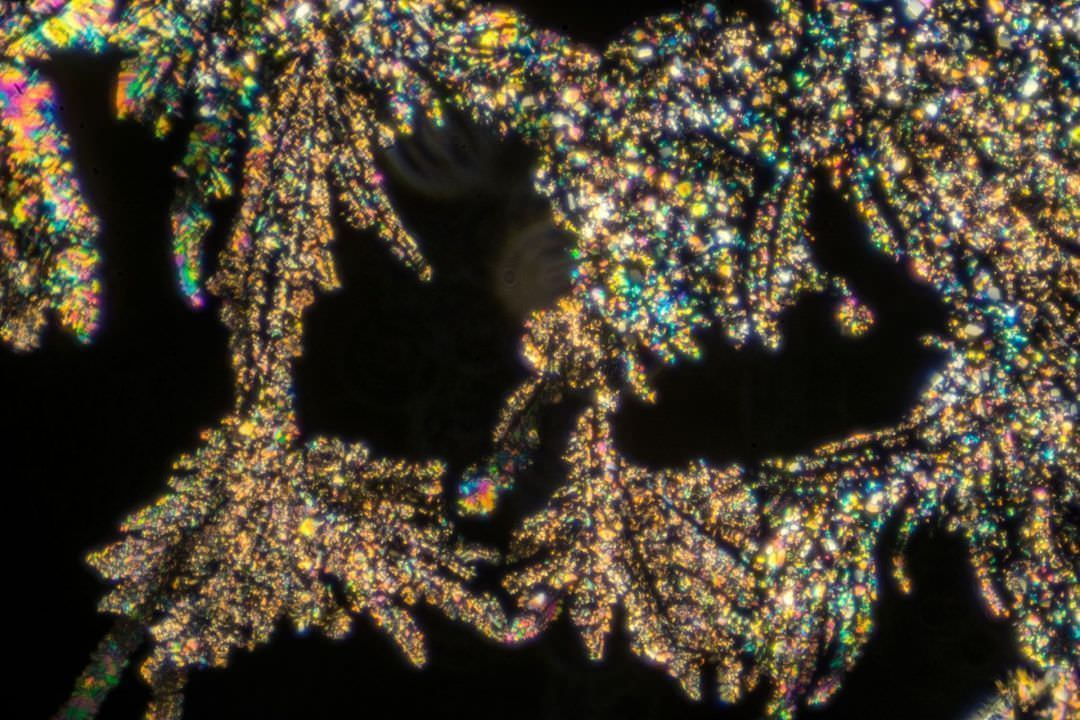 Nicatonic Acid by Polarized Light Microscopy