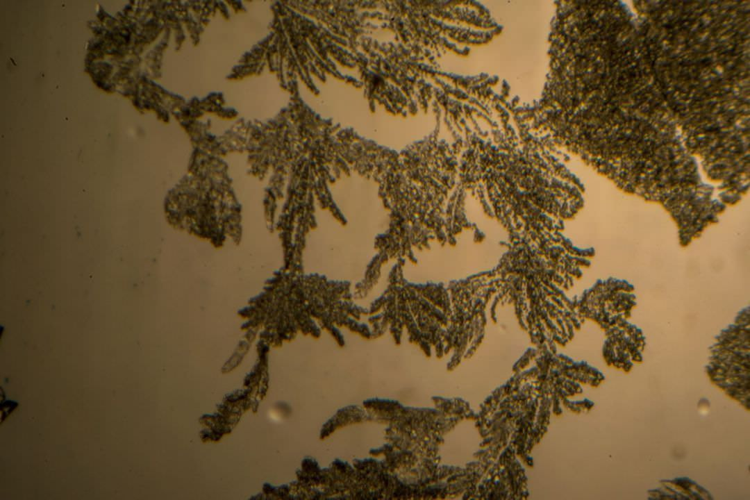 Nicatonic Acid by Light Microscopy