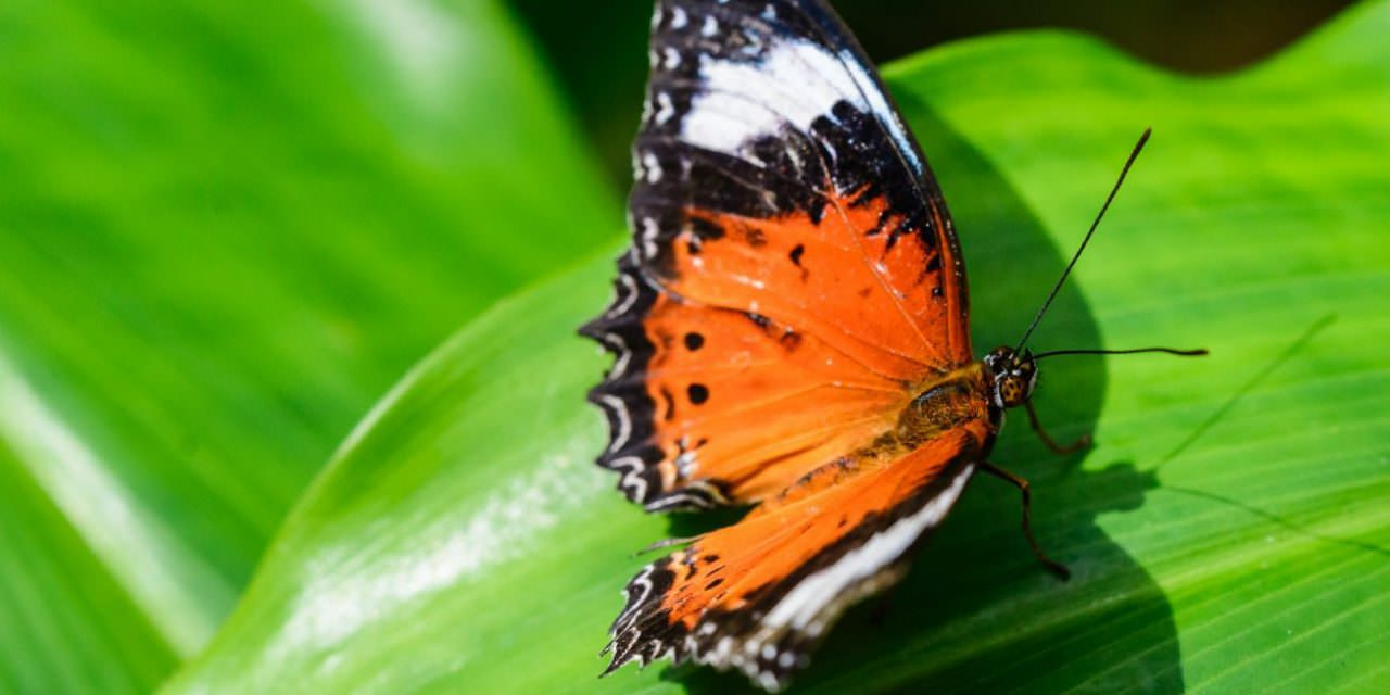 Butterfly – Melbourne Zoo