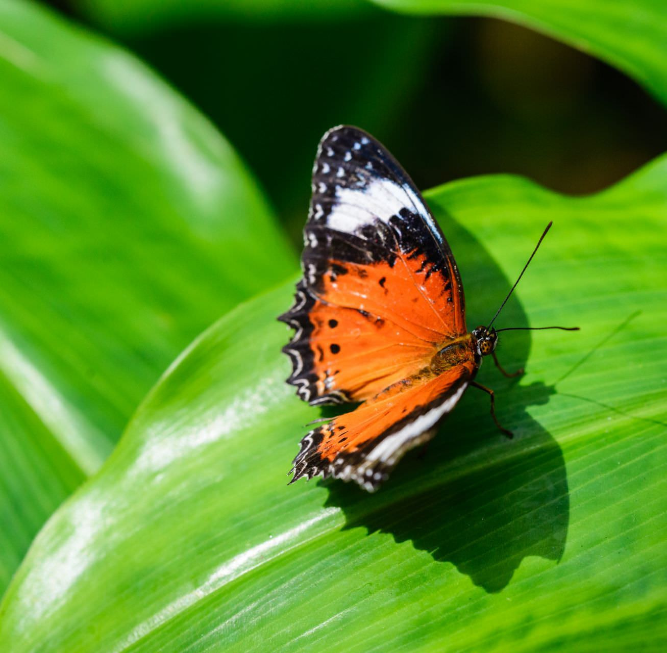 Butterfly - Melbourne Zoo
