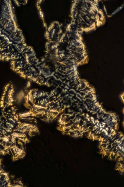 Holmium (Metal) by Polarized Light Microscopy