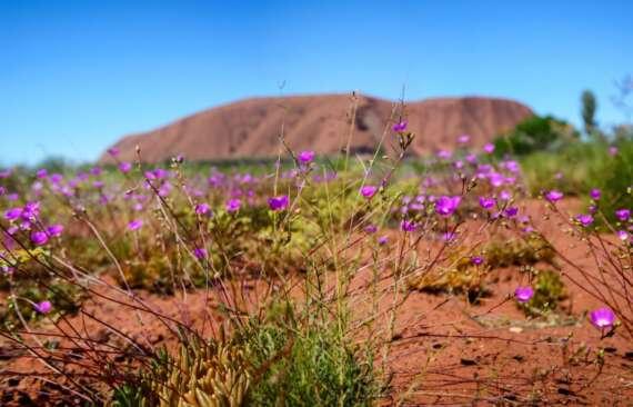 Uluru_5